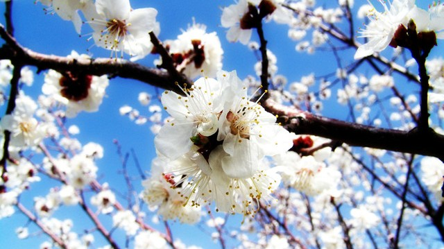 springtime-1410227-640x480