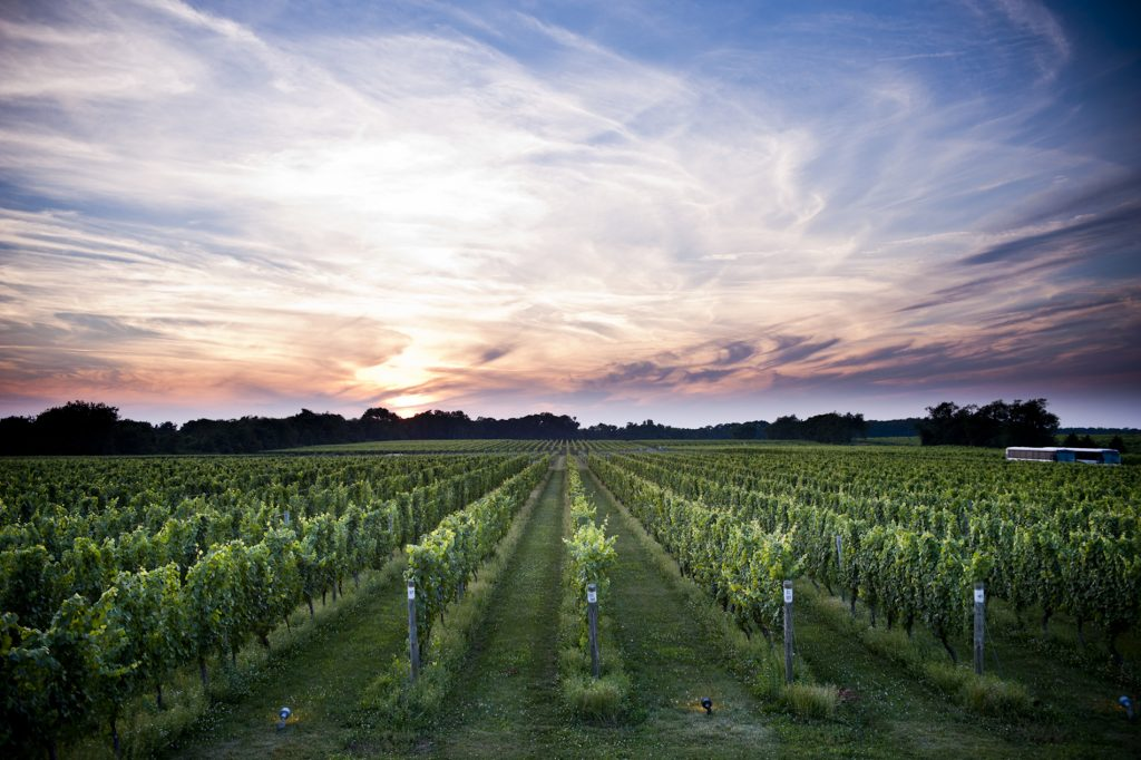 Beautiful sunset at a Long Island vineyard