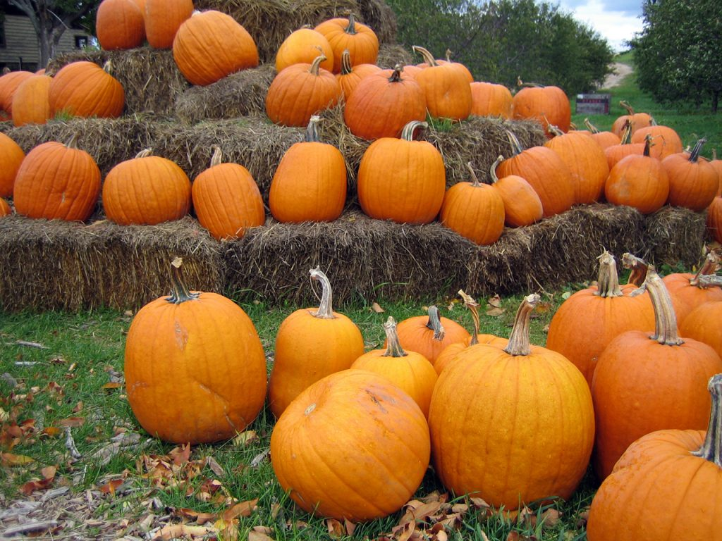 Pumpkin Patch- a favorite fall activity on Long Island
